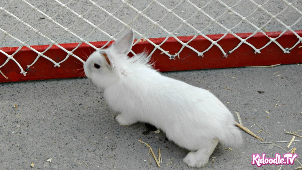 Hippity Hoppity Easter Is On Its Way - Kidoodle.TV