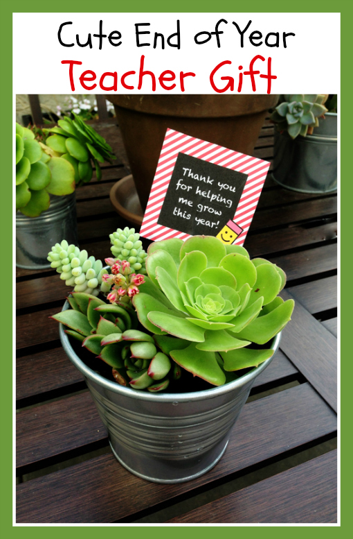 Teacher Succulent Gift
